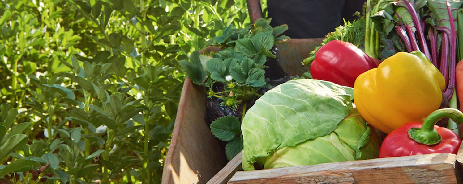 نرم افزار حسابداری ویژه باغداران و فروشندگان مواد کشاورزی
